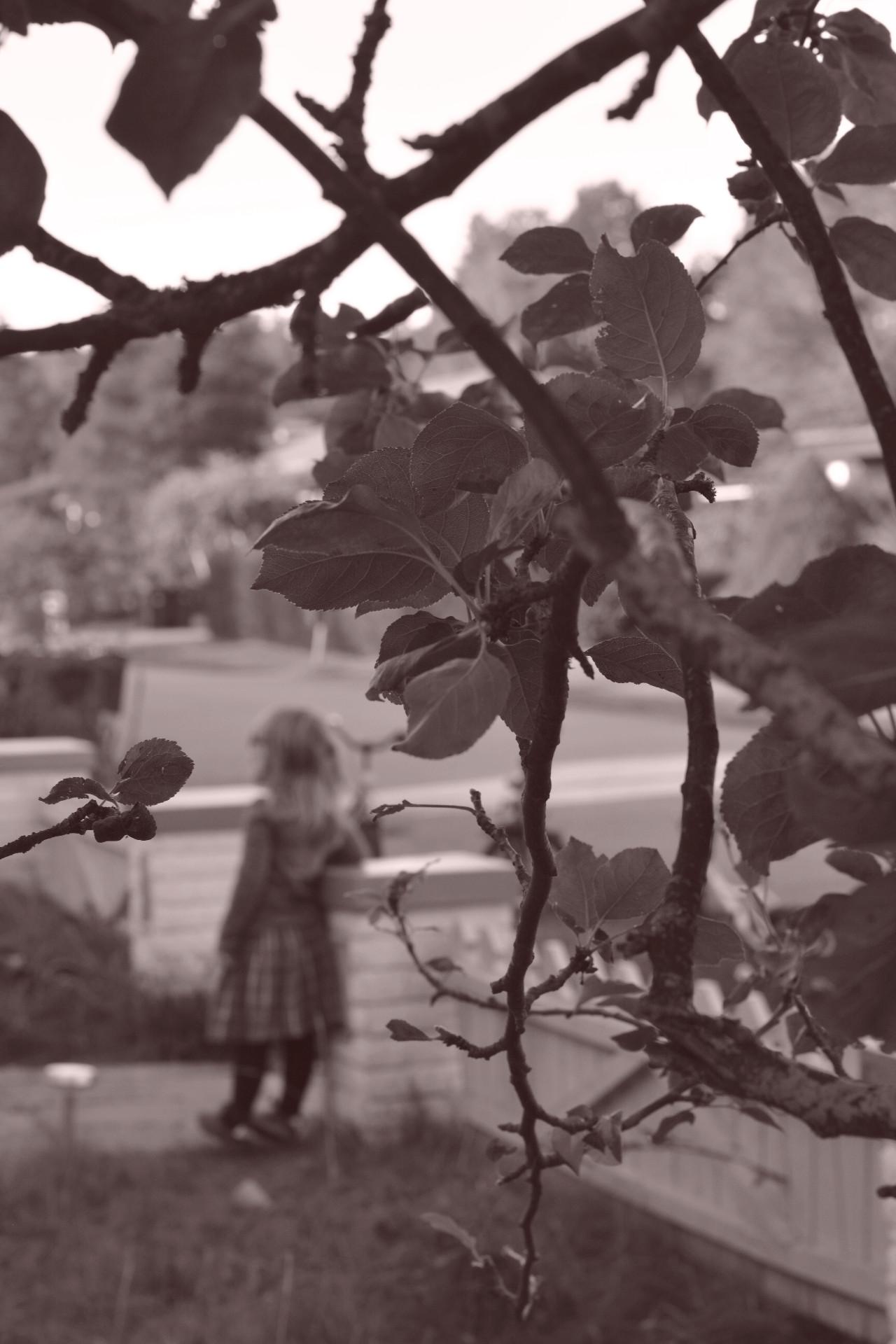 Svartvitt sepia flicka i trädgård med äppelträd i förgrunden.