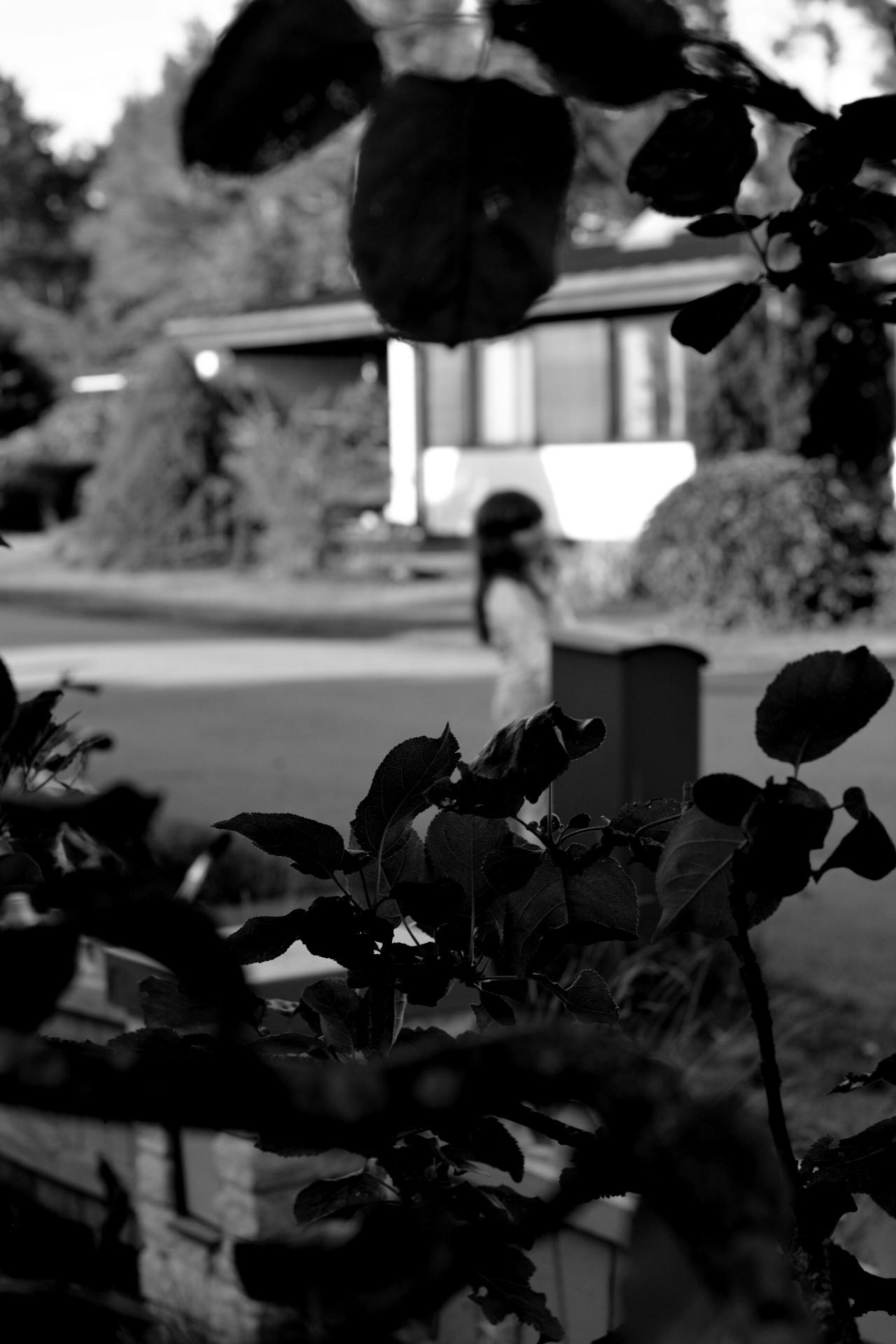 Äppelträd, flicka ur fokus. svartvitt