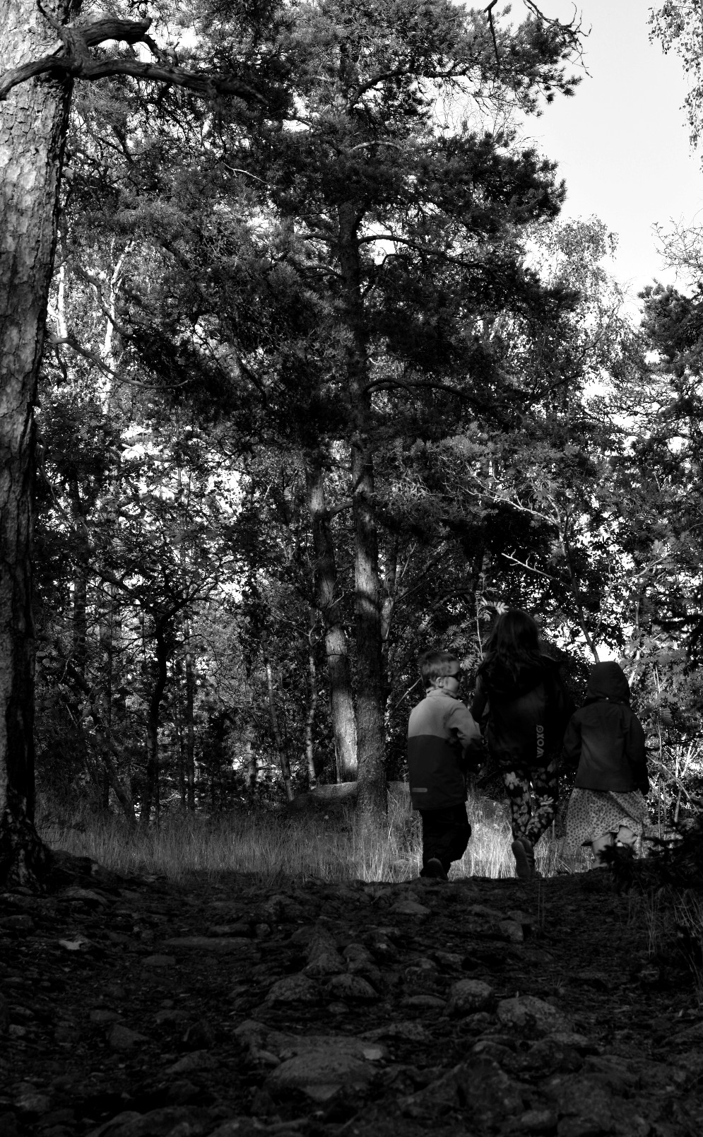 Svartvit tre barn går i skogen.