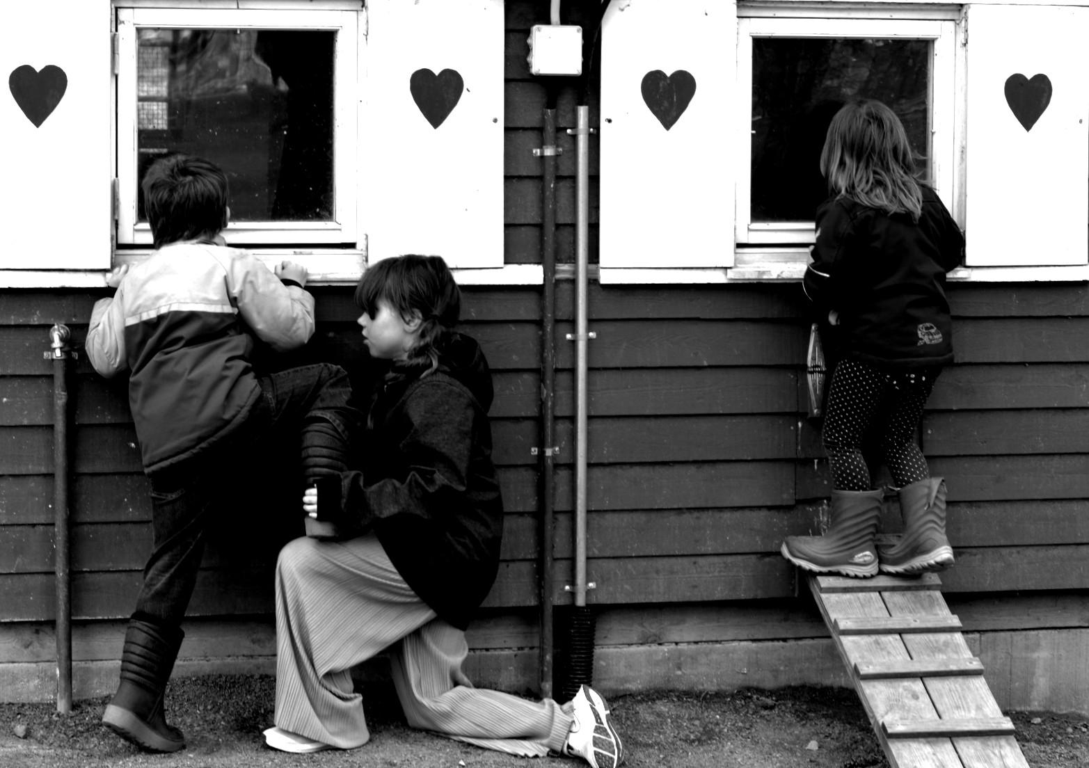 Tre barn framför fönster med hjärtan på. Ett barn får stå på ett annat barns knä för att kunna titta in i ett fönster. Svartvit bild.